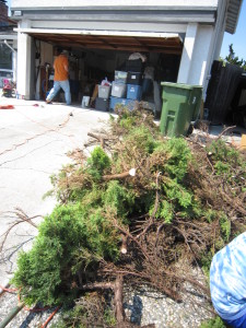Big pile of branches.  We used 5 green cans (we have such great neighbors).